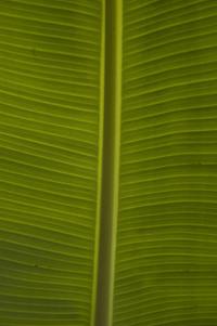Bananaleaf