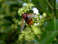 Insecte 14