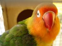 lovely bird 4