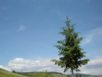 Romanian nature