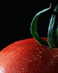 tomato_ 2