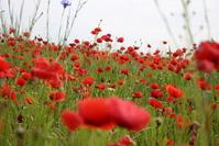 Opium Red