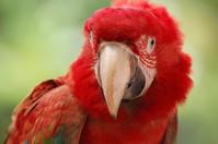 parrot series 1