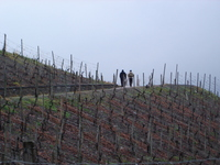weinberg (vineyard)