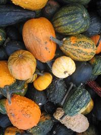 Gourds gourds gourds! 3