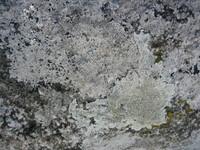 Texture of natural landscape