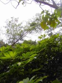 green0 1
