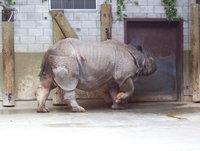 The Toronto Zoo 1