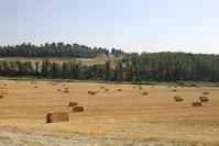 Harvest time 2