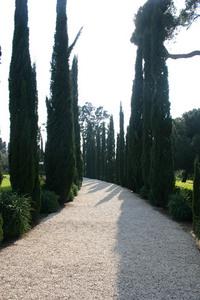 Bahai garden 6