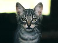 Cat facing