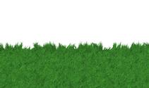 Grass / Lawn