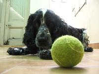Dog and Ball 1