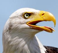 Tired eagle
