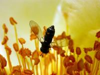Insecte 07