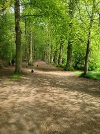 Shady Forest Path