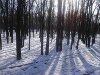 Snow in Razgrad