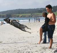 Dog Trix 02