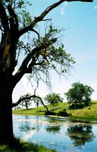 Simple pond