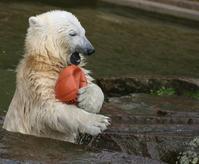 Flocke eats ball 2