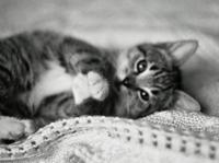 Funny kitten 4