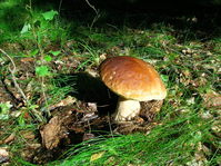 Swedish Magic Forest