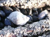 shell_ 1