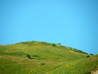 Open Pastures 3