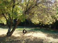 Tire swing in Autumn