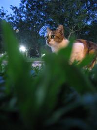 A Calico Cat 4
