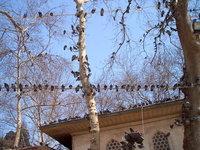 Istanbul's birds
