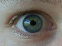 Eye in detail