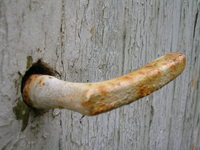 Old rusty handle 2