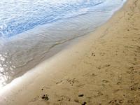 Seabeach 1