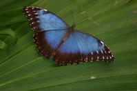 buttelfly
