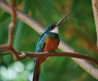 Bird from Brazil