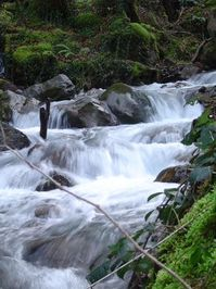 Rapids II