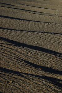 Fox footprints on the sand