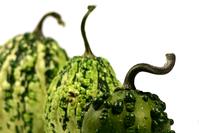 green decorative pumpkin 4
