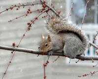 snowy food