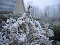 Winter 2004 3