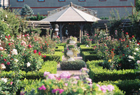 Fall Gardens 3