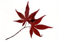 Leaf 102