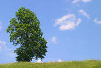 Tree Walchensee Germany 2