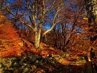 Autumn forrrest - HDR