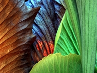 leafy textures