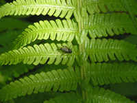 little fly 1