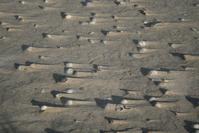 Shells on windy beach 5