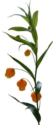 sunny orange flowers 3