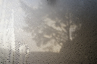 morning dew:: 1